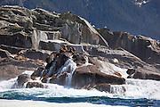 Sea Lions, Sitka, Southeast, Alaska