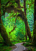 The Hoh Rainforest is located on the Olympic Peninsula in western Washington state, USA. It is one of the few temperate rainforests in the U.S., and also one of the largest.  It was formed thousands of years ago by glaciers.