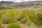 Colorful plants grow during the summer in the riparian zone along the West Little Owyhee River in southeast Oregon.