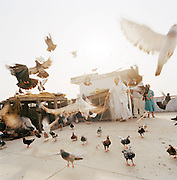 Pigeons fly on rooftop with owner, Lucknow, Uttar Pradesh, India