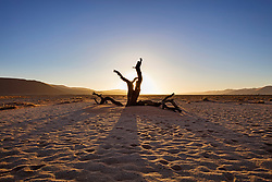 Dead tree on sand at Sossusvlei, Namibia, Africa