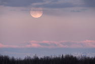 The May Full Moon rises over the distant Alaska Range into a pink sky.