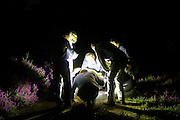 Moth trapping evening organised by Surrey Wildlife Trust on Ockham Common. Surrey, UK.