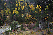 Autumn colours and sceneries in the Baima Snow Mountain Nature reserve, Yunnan, China