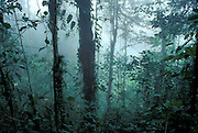 Mist in an Ecuadorian cloud forest. Los Cedros Biological Preserve, Ecuador. Choco phytogeographic region in northwestern Ecuador.