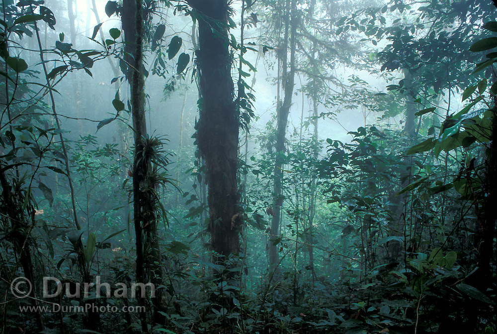 Mist in an Ecuadorian cloud forest. Los Cedros Biological Preserve, Ecuador. Choco phytogeographic region in northwestern Ecuador.
