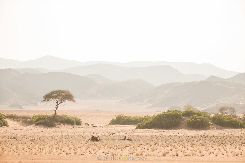 Desert Scrub, hoanib river, Skeleton Coast, Northern Namibia, Southern Africa