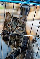 Inde, Maharashtra, Mumbai (Bombay), chat à vendre au marché de Crowford // India, Maharashtra, Mumbai (Bombay), cat to sale at Crowford market