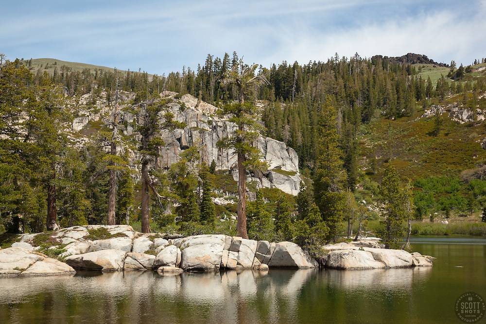 """""""Paradise Lake 3"""" - Photograph of pine trees along the shore of Paradise Lake in the Tahoe National Forest."""