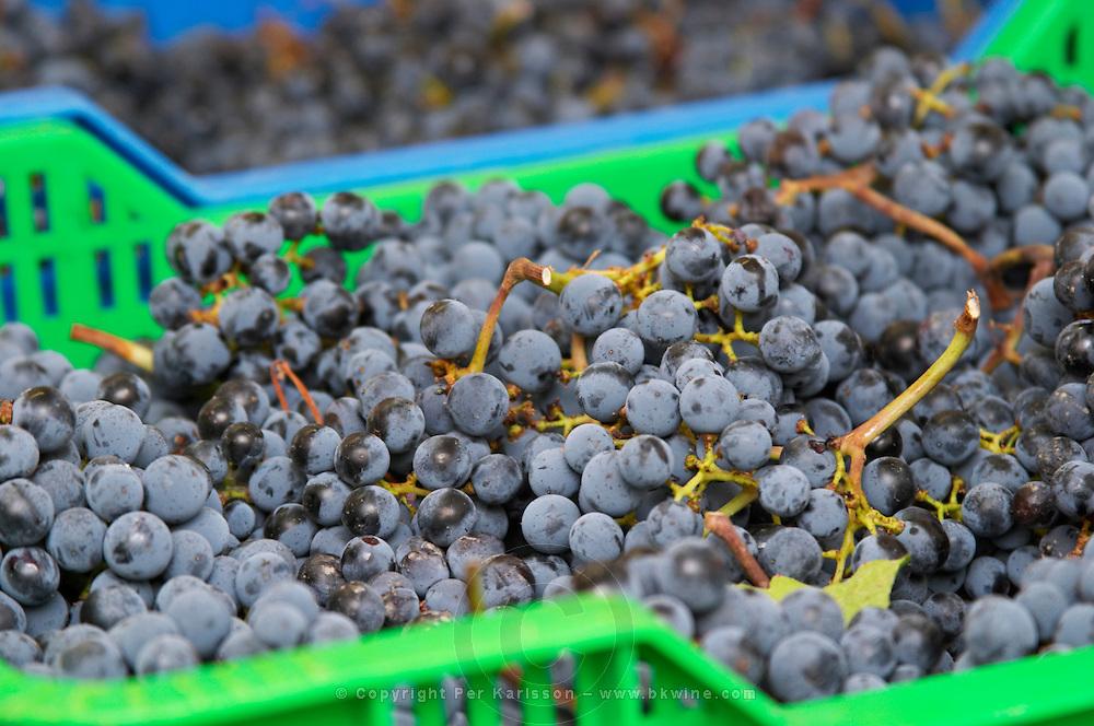 Grape reception at harvest. Cabernet Sauvignon. Clos de l'Obac, Costers del Siurana, Gratallops, Priorato, Catalonia, Spain.