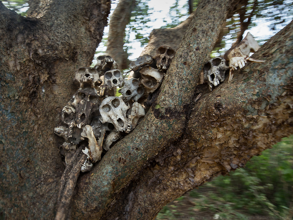 Monkey skulls. Staying in Mandagao camp in Mangola, a touristic destination to see the Hadza community.