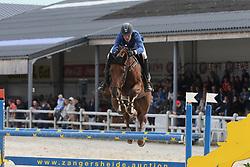 Van Hoecke Katrijn, BEL, I'm So Fancy Vdm Z<br /> 4 years old Horses<br /> BK Young Horses Gesves 2021<br /> © Hippo Foto - Julien Counet