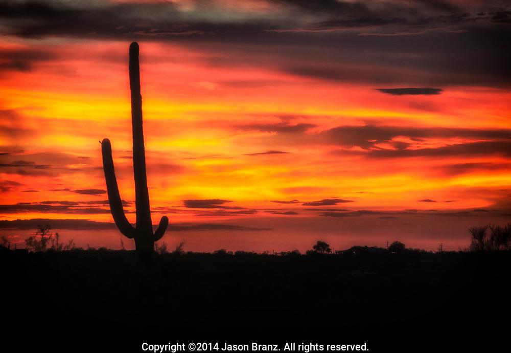 Monsoon season sunset over Saguaro National Park, Arizona.