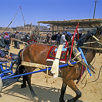 A Uygar test drives a horse and cart at the weekly bazaar in Kashgar (Kashi), a town on the ancient Silk Road in Xinjiang, China.