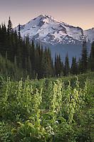 Glacier Peak North Cascades Washington