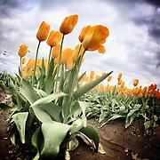 Girls Weekend Tulips and Harbors 4-20 thru 4-21-2013