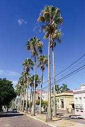 Avenida Marechal Floriano, também conhecida por Avenida das Palmeiras Imperiais. FOTO: Marcos Nagelstein/Agência Preview