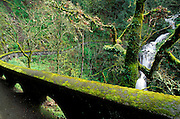 Moss covered trail and cascade at Shepperd's Dell, Columbia River Gorge National Scenic Area, Oregon