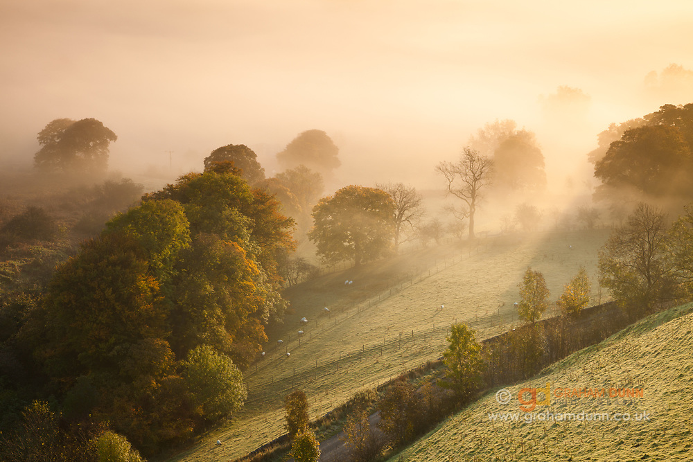 An atmospheric autumn scene of trees in the Hope Valley partially enshrouded in mist and illuminated by the golden light of sunrise. Captured near to Odin Mine in the Derbyshire Peak District. England, UK.