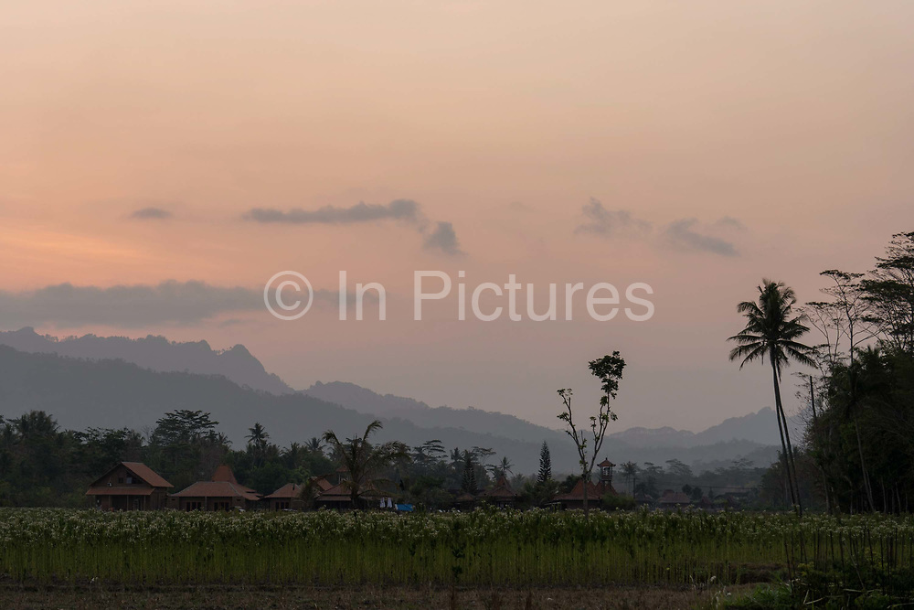 Rural Borobudur at sunset on the 25th October 2019 in Java in Indonesia.