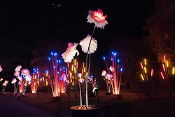 © Licensed to London News Pictures. 21/11/2017. London, UK. A visitor views tall illuminated flowers at the opening of Christmas at Kew at Royal Botanical Gardens, Kew. The spectacular displays are illuminated by over one million tiny twinkling lights placed all over Kew Gardens - open Wednesdays – Sundays from 22 November 2017 – 2 January 2017. London, UK. Photo credit: Ray Tang/LNP