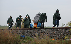 © London News Pictures. Migrants cross the border into Hungary from Serbia close to the town of Roszke, Hungary, September 10 2015. As the EU struggles with a major migrant crisis, the European Commission has proposed that 120,000 additional asylum seekers should be shared out between members, using binding quotas.   Picture by Paul Hackett /LNP