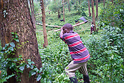 A man from Buhoma Village on the edge of Bwindi Impenetrable Forest in Uganda axes a tree down to do some building work on his home. It takes him an hour before it falls.