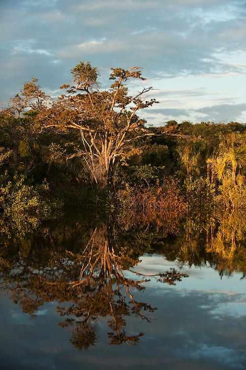 Permanent ponds in Savannah<br /> Rupununi<br /> GUYANA<br /> South America