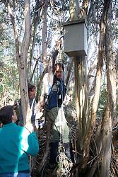 Checking Leadbeater's Possum Nest Box