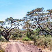 A dirt road through the scrub at Lake Manyara National Park in northern Tanzania.