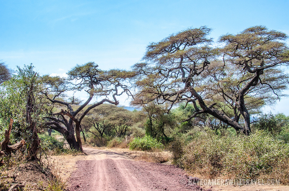 A dirt road through the scrub at Lake Manyara National Park in northern Tanzania.
