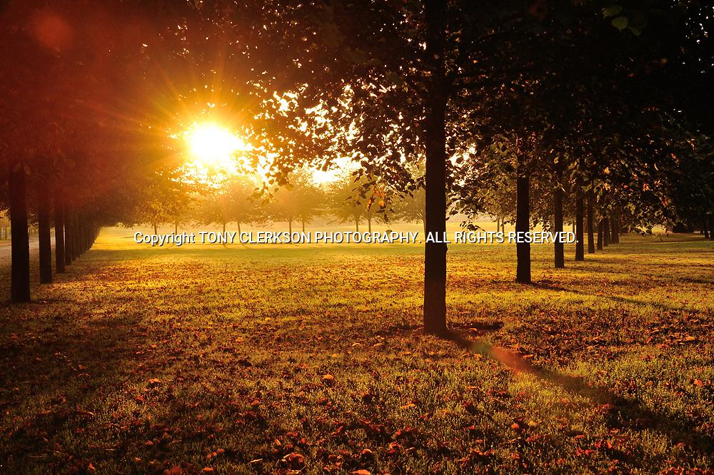 Early morning autumn sunshine lights up Glasgow Green