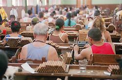Cigar makers in the Partagas cigar factory; Havana; Cuba,