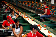 Anabel Gamboa Reyes, 24, right, of Nayarit, Mexico waits to inspect peaches as fellow workers pack them into shipping boxes. Reyes works at the farm with her father, mother, and sister.