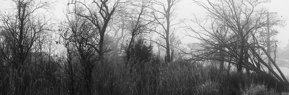 Morning fog shrouds the surrounding trees and foliage of Point Lookout State Park. Point Lookout is also near the former site of Camp Hoffman, a prisoner of war camp for confederates during the Civil War. Of the some 50,000 rebel soldiers who passed through its gates, approximately 4000 would die of disease and starvation. Consequently, many ghost stories have emanated from Point Lookout.