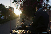 The view from the back during a caleche carriage ride through a street in Luxor, Nile Valley, Egypt.