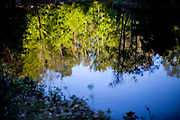 Reflections in a pond loacted in the Taunus mountain range.