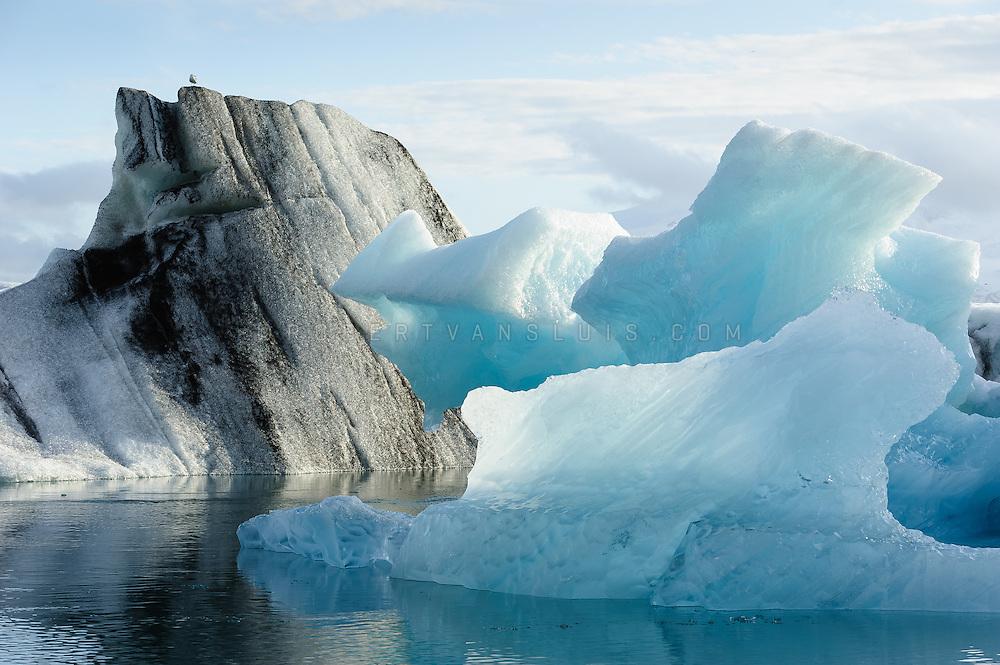 A bird rests on top of the icebergs at Jökulsárlón glacier lagoon, Iceland