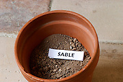 Plant pot with soil sample to illustrate different soil types, part of a series: sand, sable. Chateau Villerambert-Julien near Caunes-Minervois. Minervois. Languedoc. Terroir soil. France. Europe. Sand.