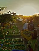 Kenya - Rift Valley wine production