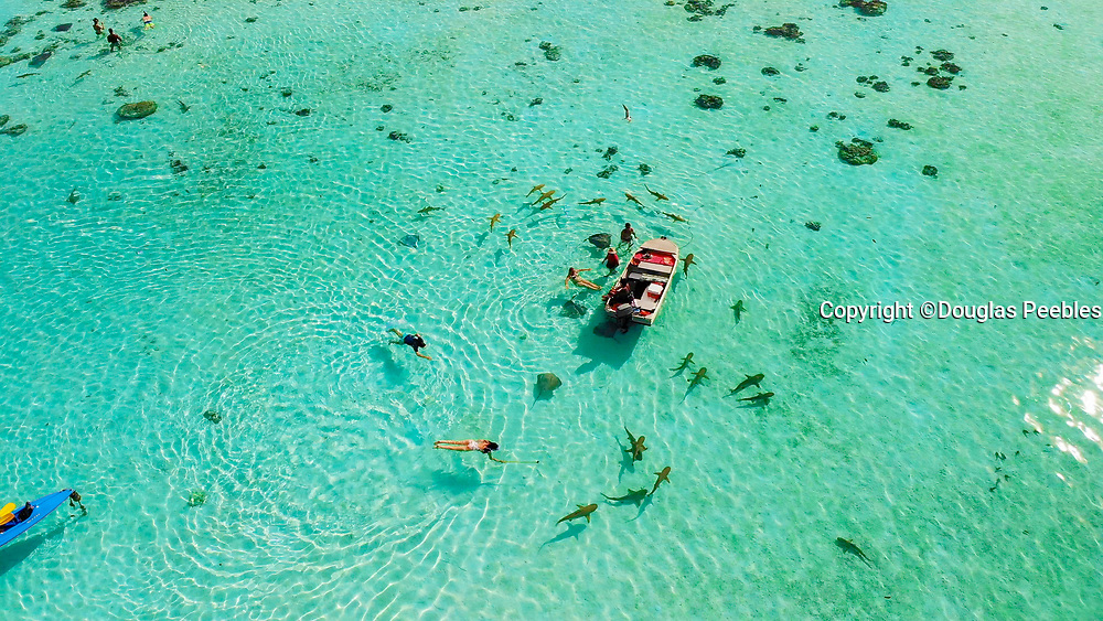 Swimming with sharks and sting rays, Tiahura, Moorea, French Polynesia, South Pacific