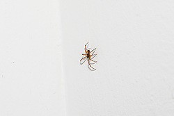 A false widow spider at Quayside House in Canning Town, East London. Canning Town, London, October 30 2018.