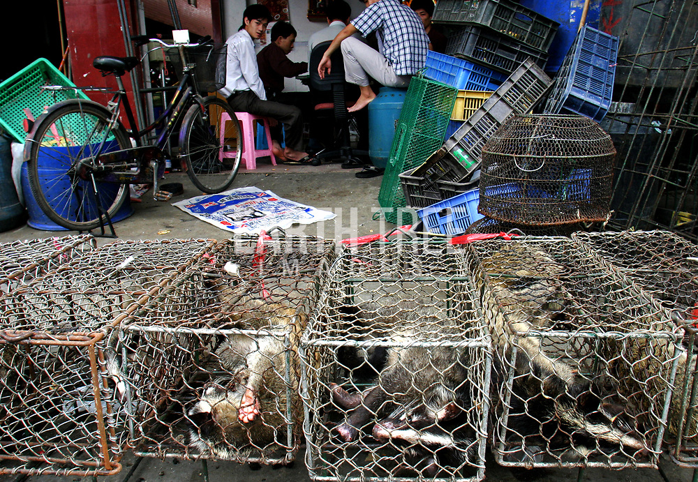 HKG0120030718 HONG KONG , CHINA : Civet cats in filthy cages await their fate at Xin Yuan market, Guangzhou .Civet cats and dozens of other wild animals are soon to be back on mainland restaurant menus, with the lifting of a ban imposed during the Sars outbreak, according to Mainland Forestry Administration.The reason behind the lifting the ban was that the forestry administration believed the animal did not carry the coronavirus believed to cause Sars. Wild animal market, Guangzhou, China. Photo: Paul Hilton for Earth Tree Images