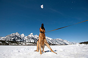 PRICE CHAMBERS / NEWS&GUIDE<br /> Donna Andrus tosses snowballs to her dog Shiva as they walk along  Grand Teton National Park's inner road on Saturday, the first day the road is open to bicycle traffic.