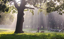 Licensed to London News Pictures. 06/09/2021. London, UK. A dog walker enjoys a warm misty start to the day in Richmond Park, south-west London as weather forecaster predict a mini-heatwave for September this week with temperatures hitting over 29c tomorrow. Photo credit: Alex Lentati/LNP