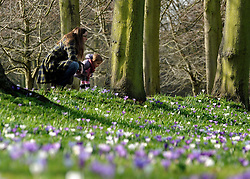 © Licensed to London News Pictures. 01/03/2012, Cambridge, UK. Sofia Tubbs aged 2 and her mother look at the crocus. People enjoy the sunshine on the River Cam in the grounds of  The University of Cambridge today, 1st March 2012. Photo credit : Stephen Simpson/LNP