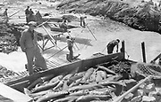 9305-B7352. close-up of Indians' fish catch at Celilo Falls. The box is on a scaffold on the north side of Horseshoe falls. Downes channel is on the left and in the background is Chinook Rock. The box cover has been removed for photographing, fishboxes had a canvas tarp to shield the catch from the sun and wind, otherwise they would quickly spoil.