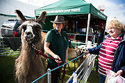 Llama trekking company display. 'Pateley Show', as the Nidderdale Show is affectionately known, is a traditional Dales agricultural show for the finest livestock, produce and crafts in the Yorkshire Dales. Held in the picturesque surrounds of Bewerley Park, Pateley Bridge, is one of the county's foremost shows. It regularly attracts crowds of 17,000 and traditionally marks the end of the agricultural show season.