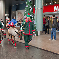 Reindeers walk in front of a mall promoting the charity of the Santa Factory as part of Hungary's Christmas celebrations in Budapest, Hungary on December 02, 2014. ATTILA VOLGYI