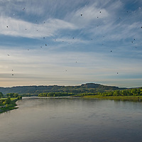 Swifts dart above the Missouri River in the Upper Missouri River Breaks National Monument, Montana.